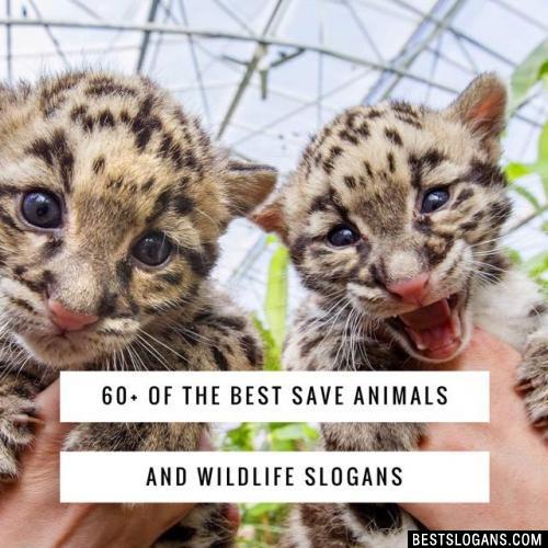 60 Catchy Save Animals Wildlife Conservation Slogans In English