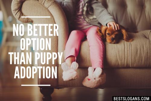 No better option than puppy adoption