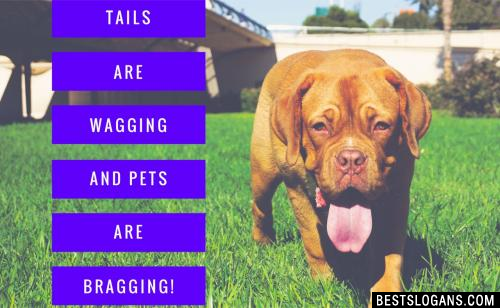Tails are wagging and pets are bragging!