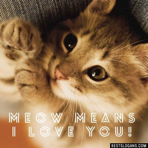 Meow means I Love You!