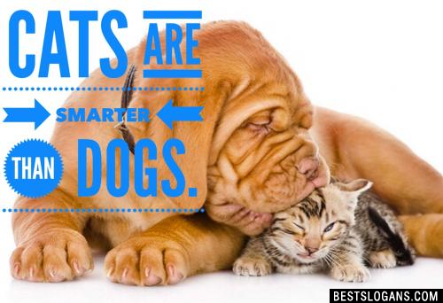 Cats are smarter than dogs.
