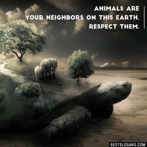 Animals are your neighbors on this earth. Respect them.