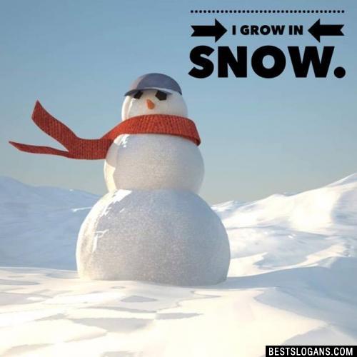 I grow in snow.