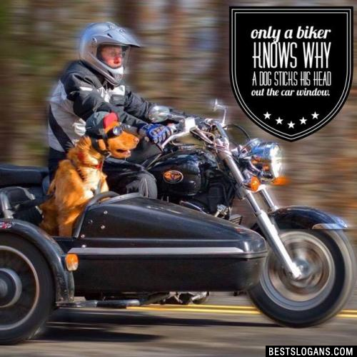 Only a biker knows why a dog sticks his head out the car window.