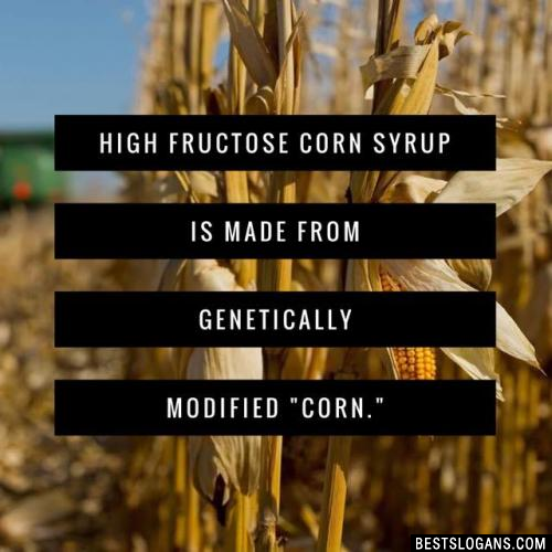 """High fructose corn syrup is made from genetically modified """"corn."""""""