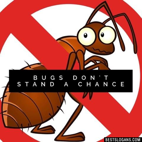 Bugs Don't Stand A Chance