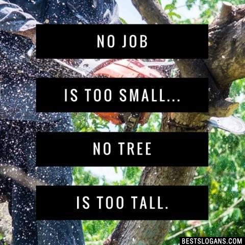 No job is too small... no tree is too tall.