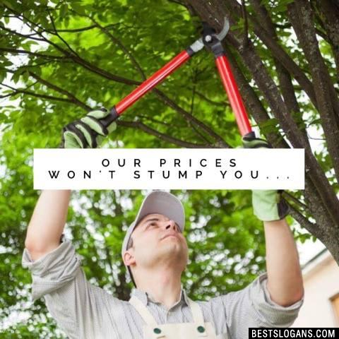 Our prices won't stump you...