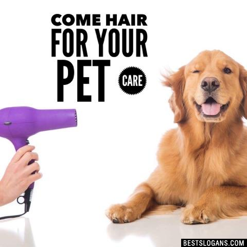 Come hair for your pet care