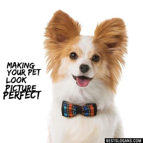 Making your pet look picture perfect