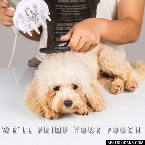 We'll primp your pooch