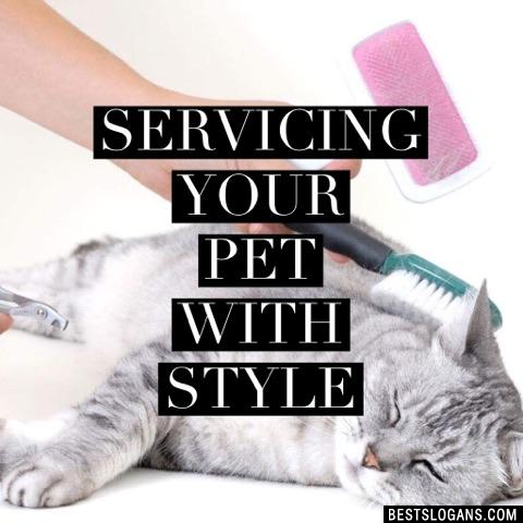 Servicing your pet with style